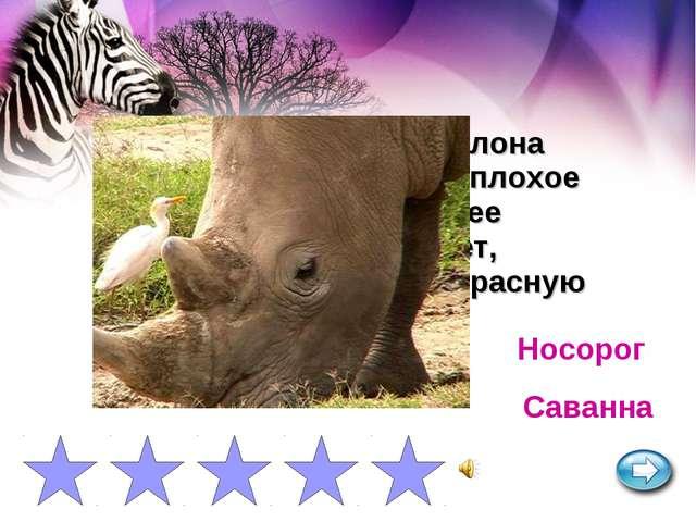 Самое крупное после слона млекопитающее. Имеет плохое зрение, но очень хороше...