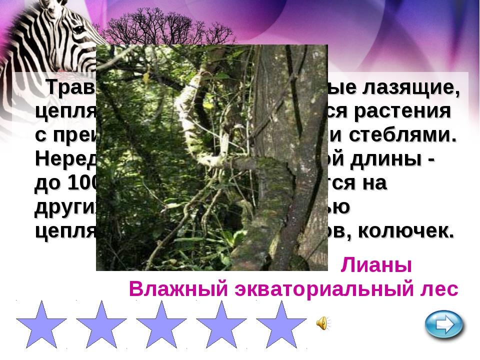Травянистые или древесные лазящие, цепляющиеся или вьющиеся растения с преиму...