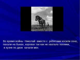 Во время войны Николай вместе с ребятами косили сено, пахали на быках, корова
