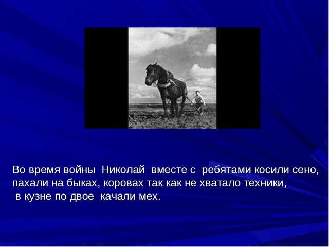 Во время войны Николай вместе с ребятами косили сено, пахали на быках, корова...