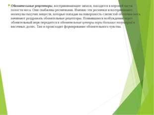 Обонятельные рецепторы, воспринимающие запахи, находятся в верхней части поло