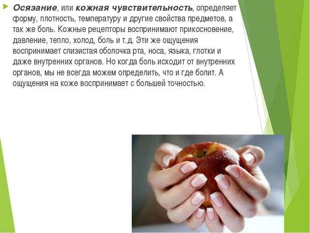 Осязание, или кожная чувствительность, определяет форму, плотность, температу...