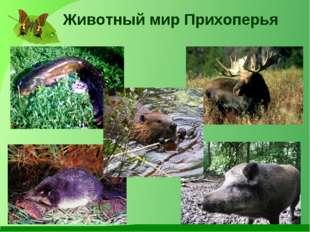 Животный мир Прихоперья