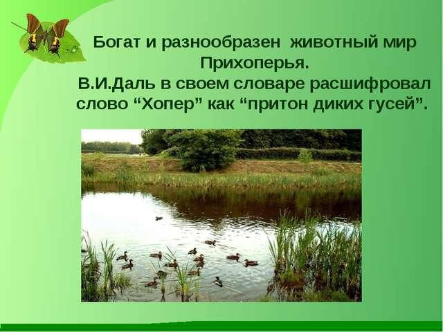 Богат и разнообразен животный мир Прихоперья. В.И.Даль в своем словаре расшиф...