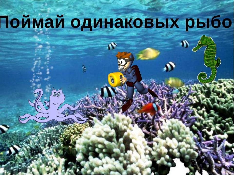 Поймай одинаковых рыбок