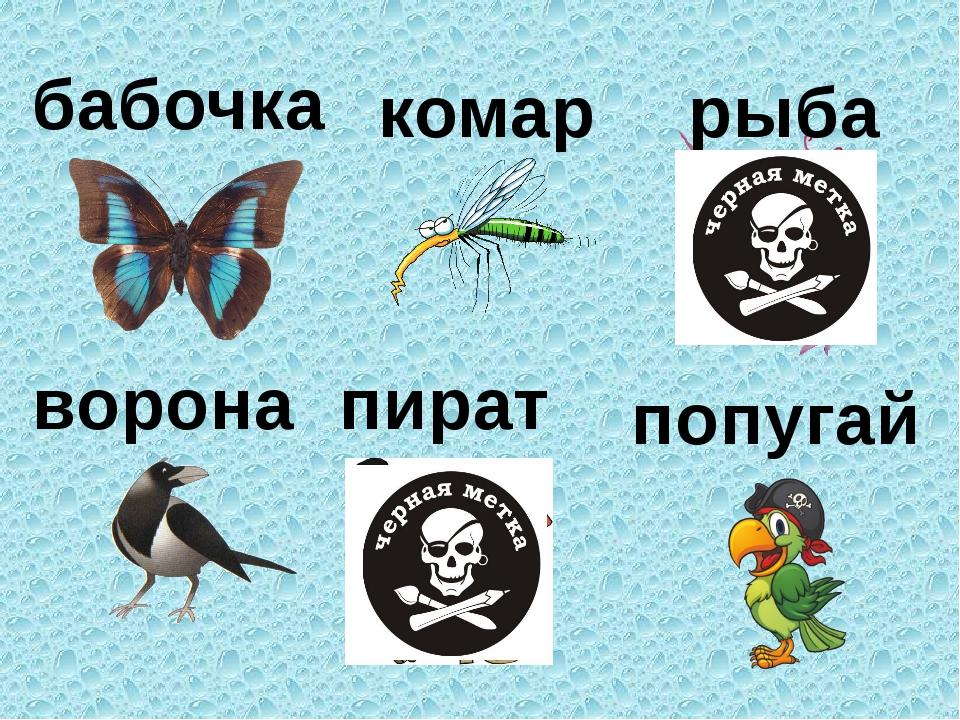бабочка комар рыба ворона пират попугай