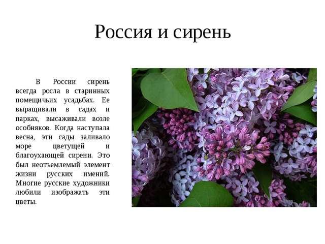 Россия и сирень  В России сирень всегда росла в старинных помещичьих усадь...