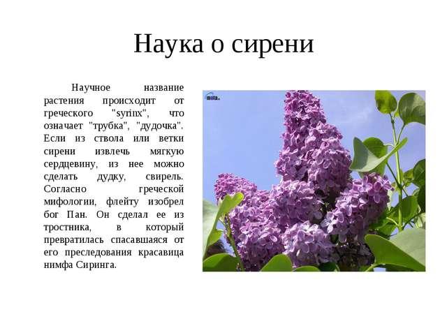 """Наука о сирени Научное название растения происходит от греческого """"syrinx"""",..."""