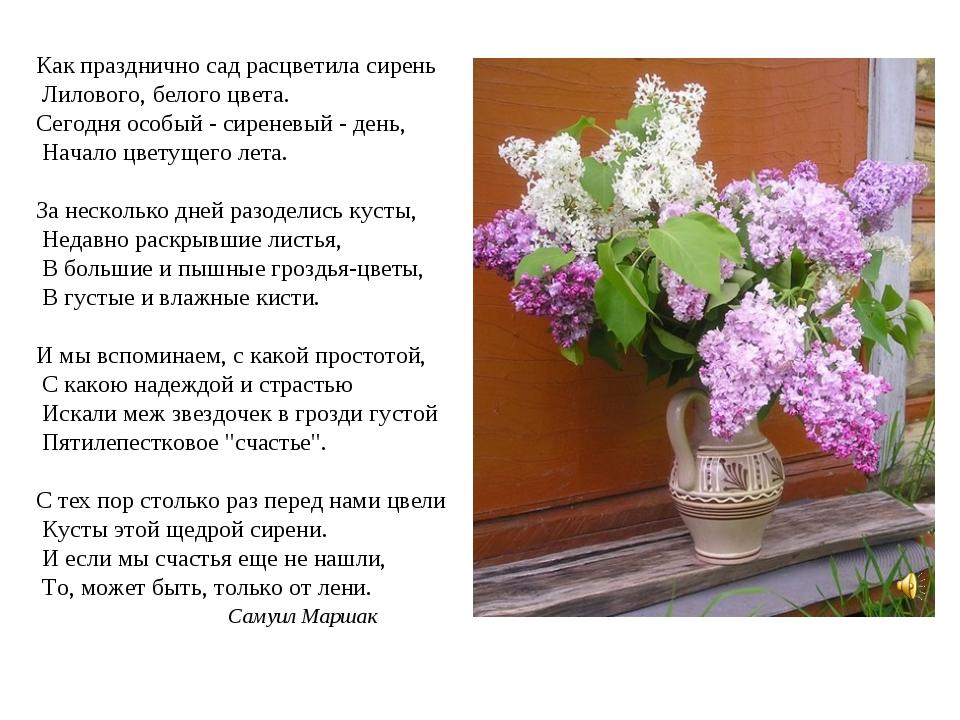 Как празднично сад расцветила сирень Лилового, белого цвета. Сегодня особый -...