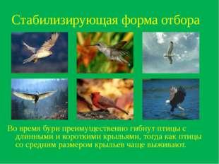 Стабилизирующая форма отбора Во время бури преимущественно гибнут птицы с дли