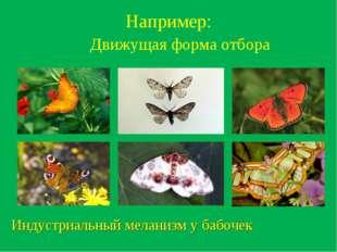 Например: Движущая форма отбора Индустриальный меланизм у бабочек