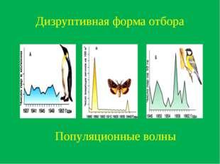 Дизруптивная форма отбора Популяционные волны
