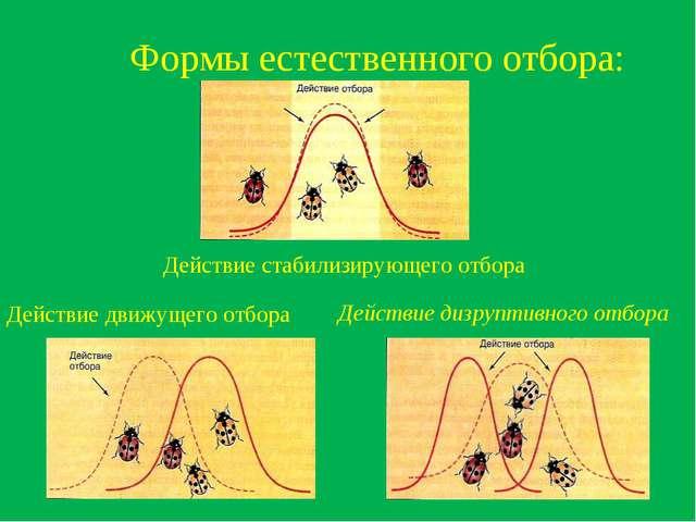 Формы естественного отбора: Действие стабилизирующего отбора Действие движуще...