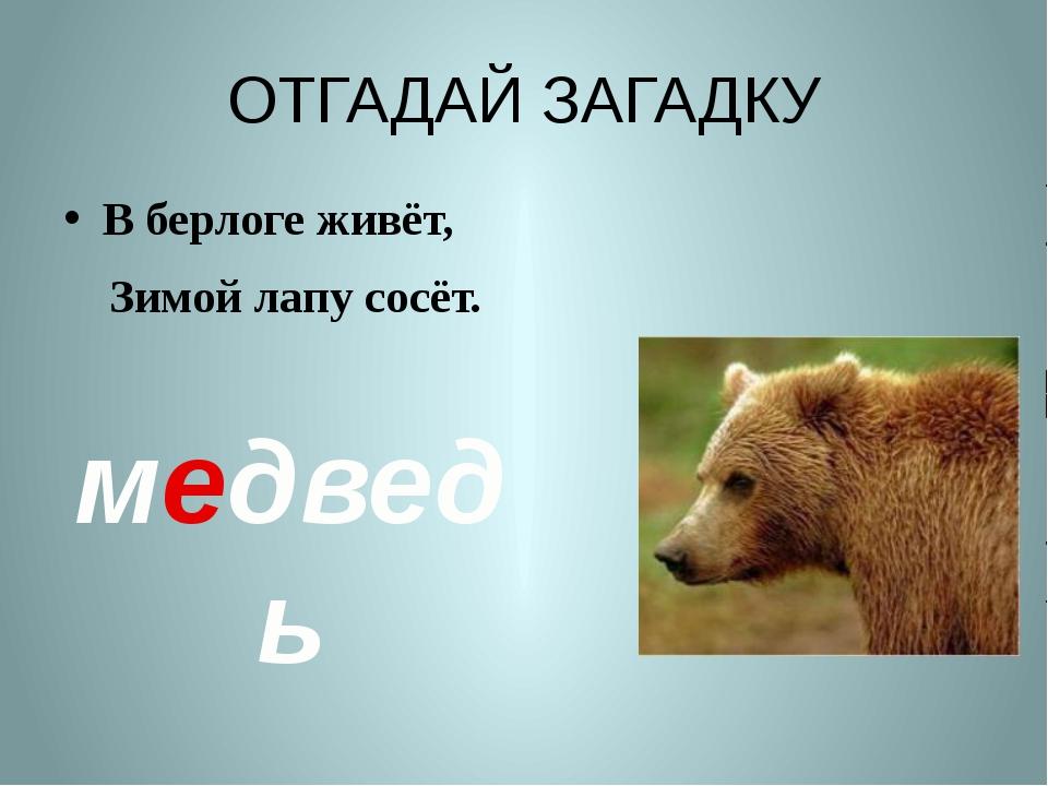 ОТГАДАЙ ЗАГАДКУ В берлоге живёт, Зимой лапу сосёт. медведь