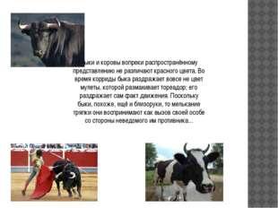 Быки и коровы вопреки распространённому представлению не различают красного ц