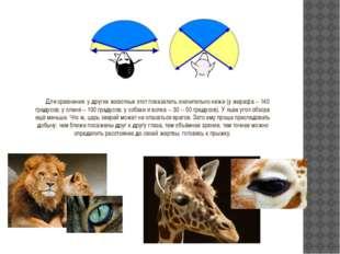 Для сравнения: у других животных этот показатель значительно ниже (у жирафа -