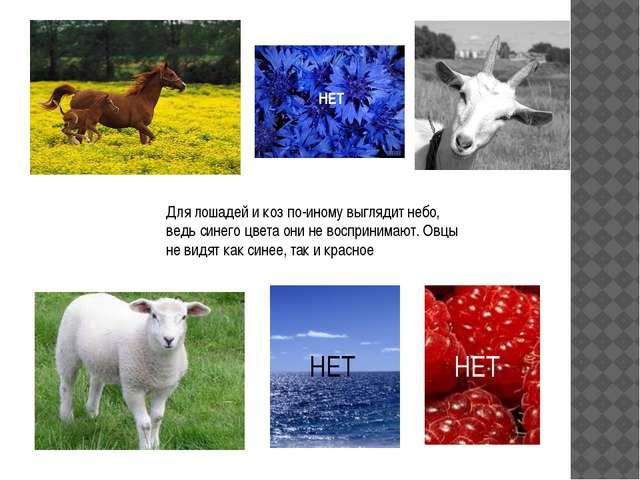 Для лошадей и коз по-иному выглядит небо, ведь синего цвета они не воспринима...