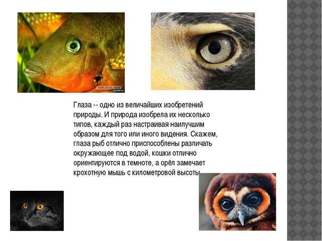 Глаза -- одно из величайших изобретений природы. И природа изобрела их нескол...