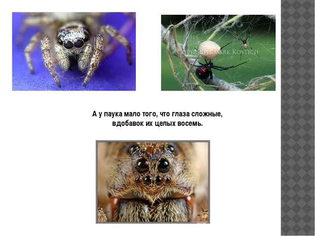 А у паука мало того, что глаза сложные, вдобавок их целых восемь.