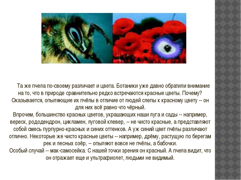 Та же пчела по-своему различает и цвета. Ботаники уже давно обратили внимание...