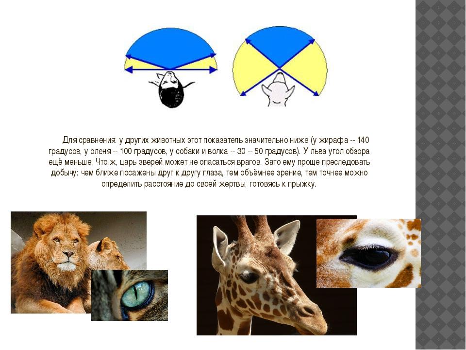 Для сравнения: у других животных этот показатель значительно ниже (у жирафа -...