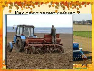 Как сеют зерно сейчас ?