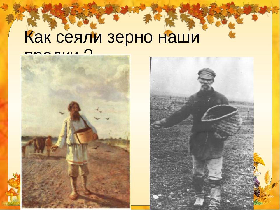Как сеяли зерно наши предки ?