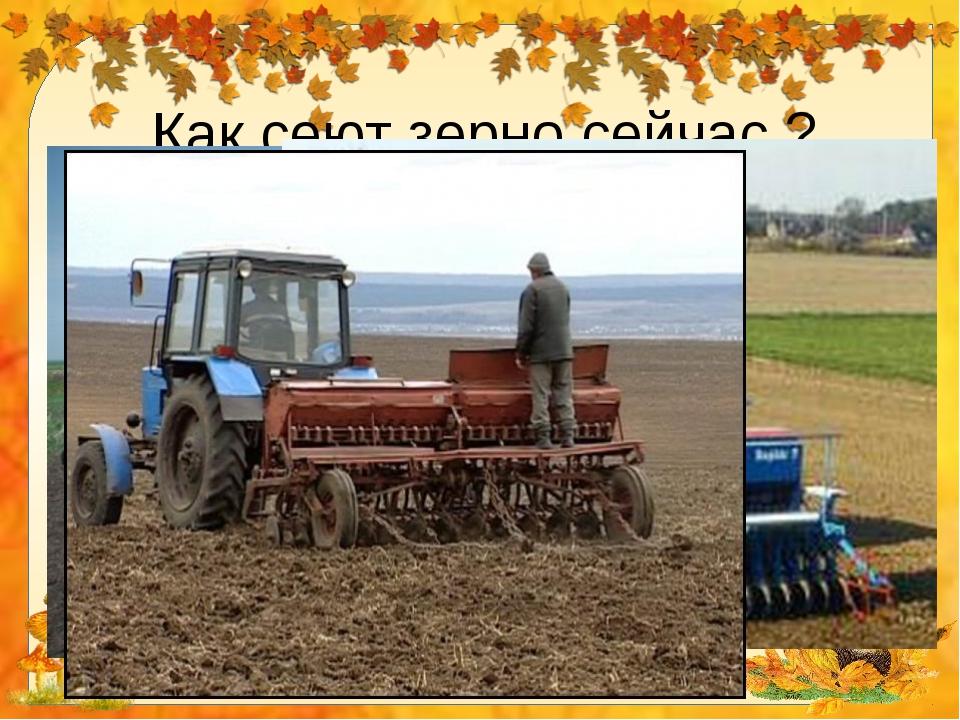 картинка трактор сеет пшеницу называют морской телятиной