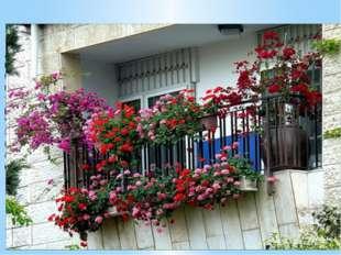 Помимо вьющихся, для украшения балкона могут быть использованы декоративно-ц