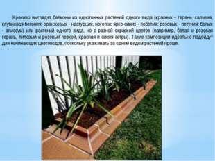Красиво выглядят балконы из однотонных растений одного вида (красных - геран