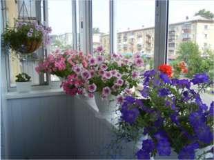Технические тонкости Перечислять все нюансы балконного цветоводства - заняти