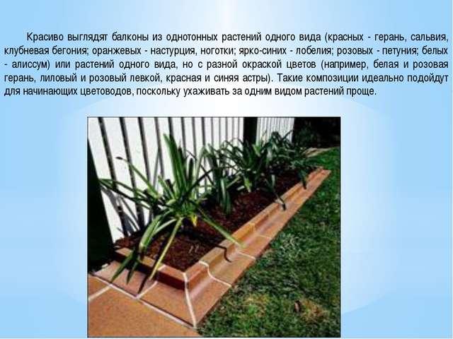 Красиво выглядят балконы из однотонных растений одного вида (красных - геран...