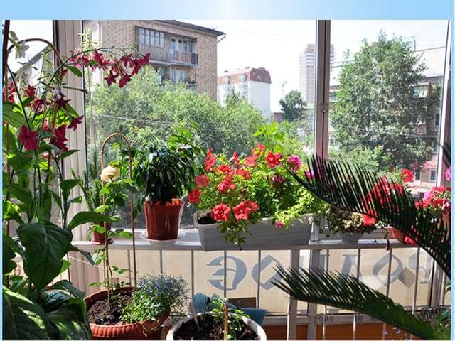 Чтобы балкон оставался цветущим все лето, необходимо подобрать растения так,...