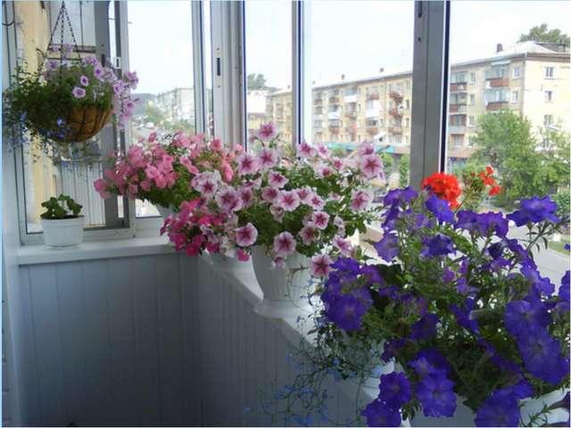 Технические тонкости Перечислять все нюансы балконного цветоводства - заняти...