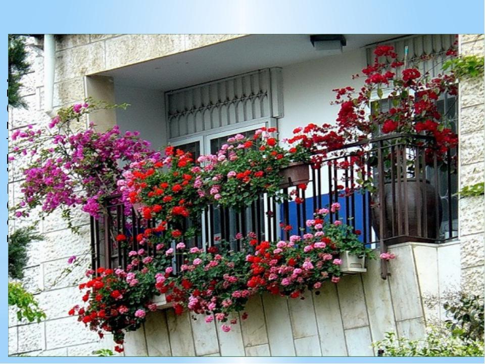 Помимо вьющихся, для украшения балкона могут быть использованы декоративно-ц...