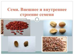 Семя. Внешнее и внутреннее строение семени Для удобства работы текст (заметки