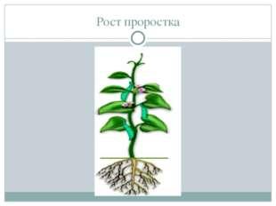 Рост проростка В землю на небольшую глубину закапывают сухое, небольшое (а ин