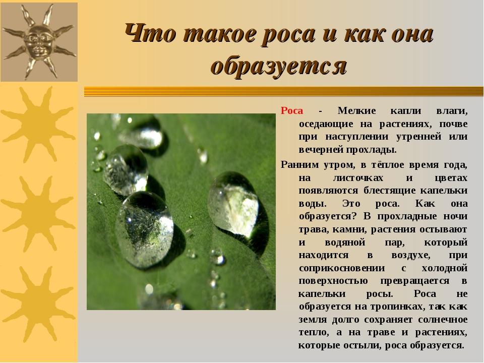 Что такое роса и как она образуется Роса - Мелкие капли влаги, оседающие на р...