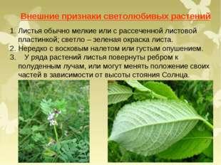 Внешние признаки светолюбивых растений Листья обычно мелкие или с рассеченной