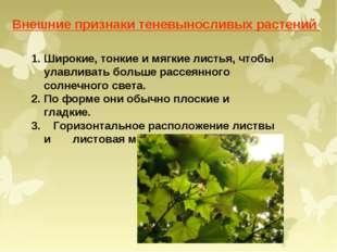 Внешние признаки теневыносливых растений Широкие, тонкие и мягкие листья, что