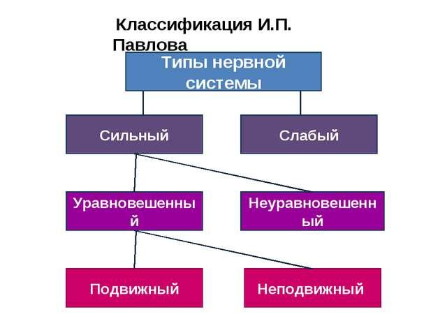 Типы нервной системы Сильный Слабый Уравновешенный Неуравновешенный Подвижный...