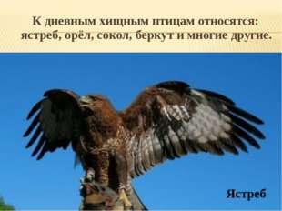 К дневным хищным птицам относятся: ястреб, орёл, сокол, беркут и многие друг