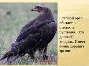 Степной орел обитает в степях и пустынях. Это дневной хищник. Имеет очень хор