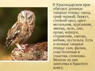 В Краснодарском крае обитают дневные хищные птицы: скопа, гриф черный, берку
