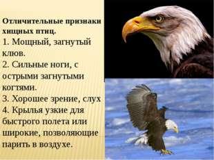 Отличительные признаки хищных птиц. 1. Мощный, загнутый клюв. 2. Сильные ног