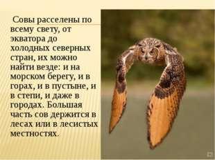 Совы расселены по всему свету, от экватора до холодных северных стран, их мо