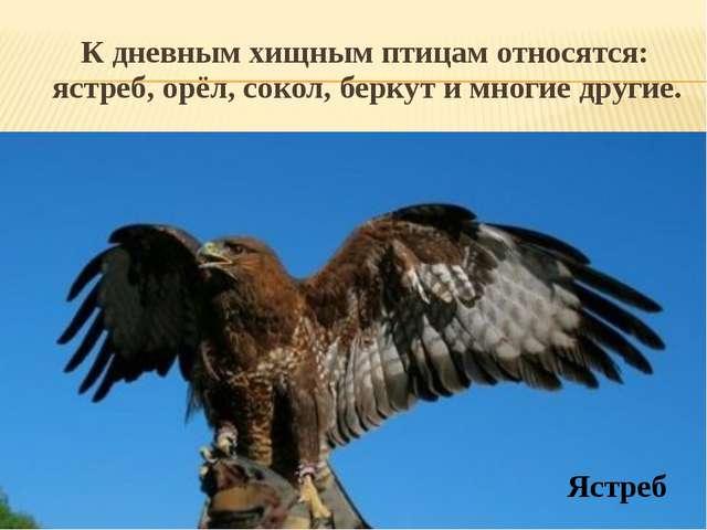 К дневным хищным птицам относятся: ястреб, орёл, сокол, беркут и многие друг...