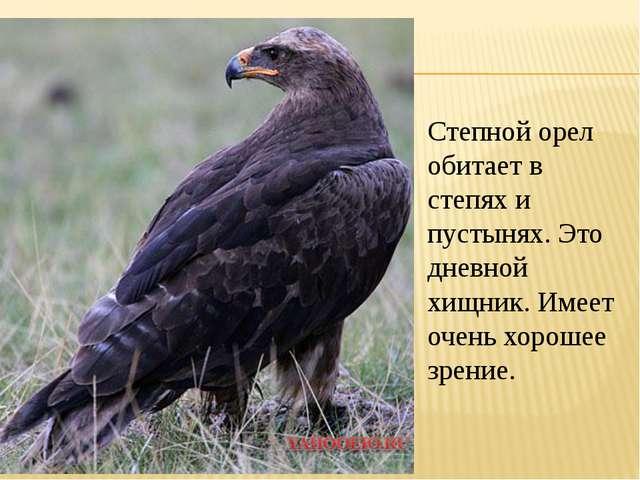Степной орел обитает в степях и пустынях. Это дневной хищник. Имеет очень хор...