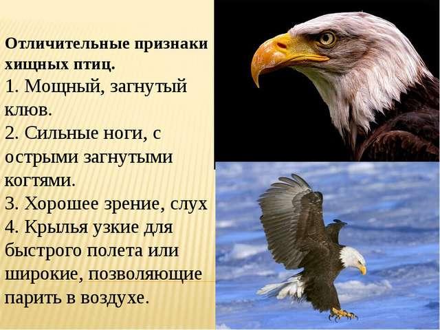 Отличительные признаки хищных птиц. 1. Мощный, загнутый клюв. 2. Сильные ног...