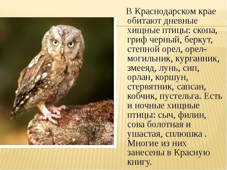 В Краснодарском крае обитают дневные хищные птицы: скопа, гриф черный, берку...